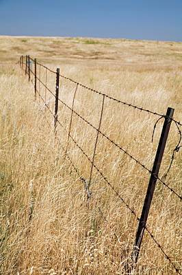 Barbed Wire Fences Photograph - Barbed Wire Fence by Jim West