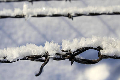 Photograph - Barbed Wire Frost by Haiti Missions