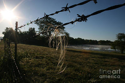 Photograph - Barbed-wire Horsehair by Martha Burton