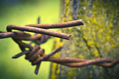 Photograph - Barbed Wire by Priya Ghose