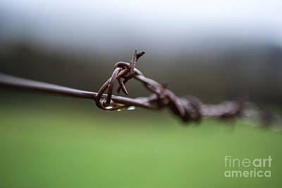 Photograph - Barbed Wire by Ray Warren
