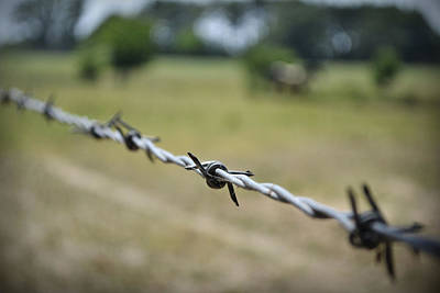 Photograph - Barbed Wire by Richelle Munzon