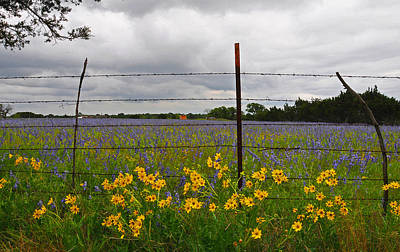 Country Photograph - Barbs N Blooms - Fine Art By Lynn Bauer by Lynn Bauer
