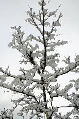 Photograph - Bare Branches With Snow by Tikvah's Hope