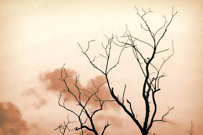 Photograph - Bare Limbs by Denise Romano