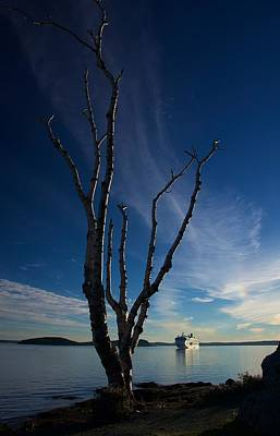 Photograph - Bare Tree And Cruise Ship by Stuart Litoff