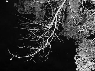 Bare Tree Branch Art Print