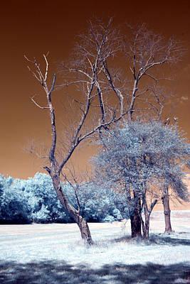 Bare Tree Cahokia Art Print by Bob Pomeroy