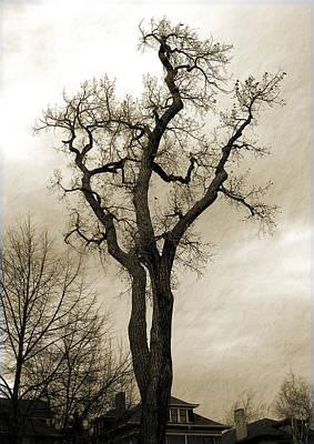 Photograph - Bare Tree by David Pantuso