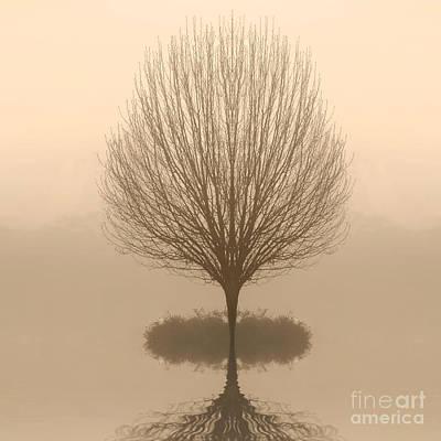 Bare Tree In Fog At Dawn Art Print