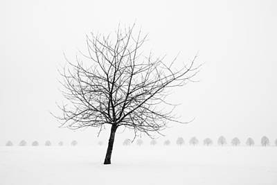 Bare Tree In Winter - Wonderful Black And White Snow Scenery Art Print