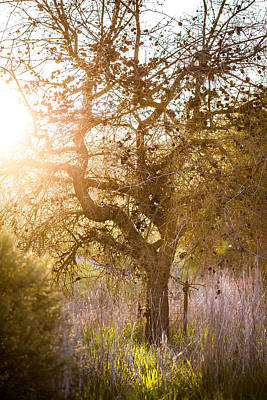 Bare Tree Art Print by Mike Lee