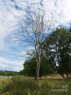 Photograph - Bare Tree by Robin Maria Pedrero