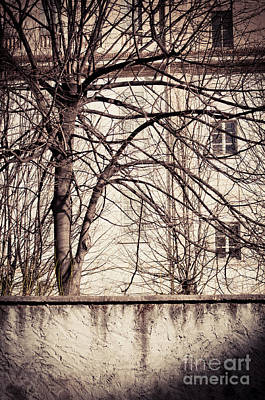 Photograph - Bare Tree With Wall And House by Silvia Ganora
