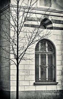Photograph - Bare Tree With Window by Silvia Ganora
