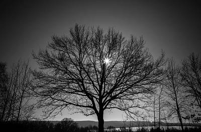 Bare Trees Photograph - Bare Tree by Wladimir Bulgar