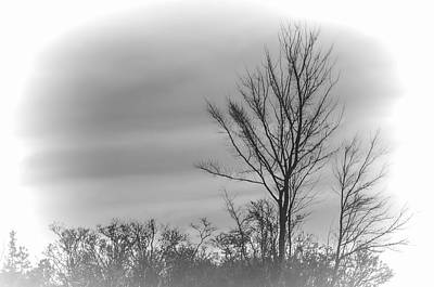 Photograph - Bare Trees In Winter by Beth Sawickie