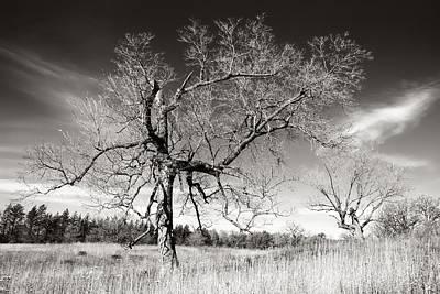 Minnesota Landscape Wall Art - Photograph - Bare Trees by Jim Hughes