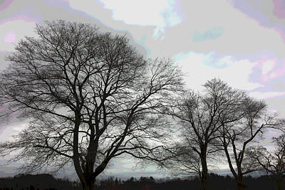 Appleton Photograph - Bare Trees Winter Sky by David Stone