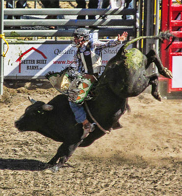 Photograph - Bareback Bull Riding by Ron Roberts