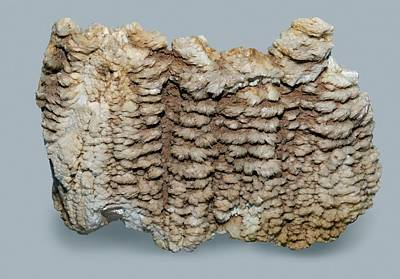 Barite Wall Art - Photograph - Barite by Science Photo Library