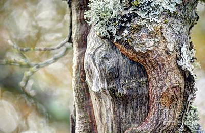 Photograph - Bark And Bokeh by Chris Anderson