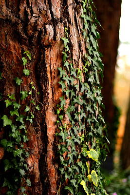 Bark And Ivy Art Print by Jacqui Collett