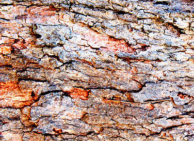 Digital Art - Bark Impressions 1 by Stephanie Grant
