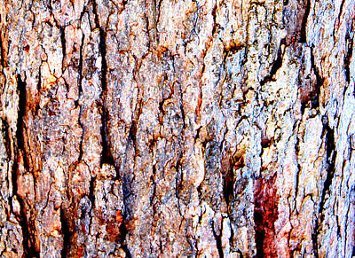 Digital Art - Bark Impressions 2 by Stephanie Grant