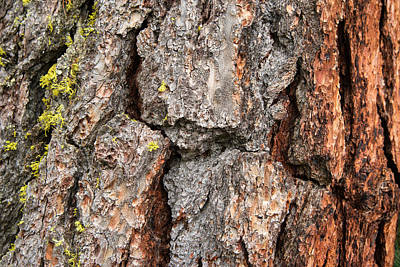 Photograph - Bark Of A Tree Closeup Photo by Matthias Hauser