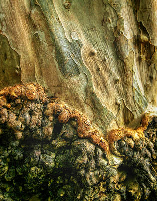 Photograph - Bark Of A Tree					 by David and Carol Kelly