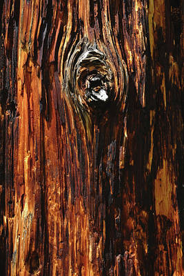 Bark Of Dead Pine Tree In Rocky Art Print