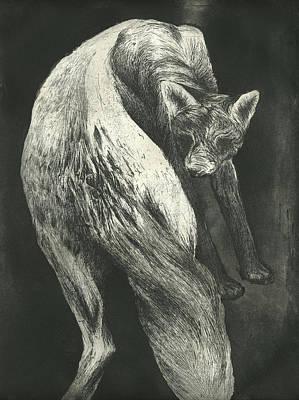 Fox Drawing - Bark by Rebecca Bourke