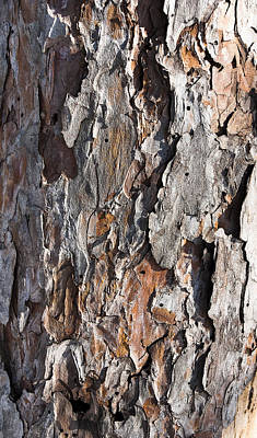 Photograph - Bark by Steven Ralser