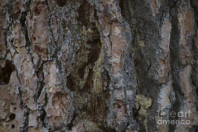 Photograph - Bark by Terri Thompson