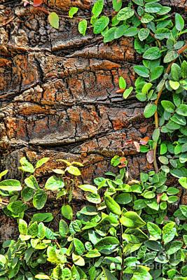 Photograph - Barking Tree By Diana Sainz by Diana Raquel Sainz