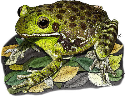 Photograph - Barking Tree Frog by Roger Hall