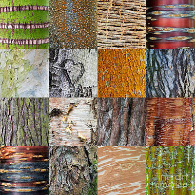 Tree Bark Photograph - Barking Up The Right Tree by Tim Gainey