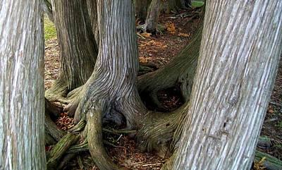 Audrey Hepburn - Barky Barky Trees by Michelle Calkins