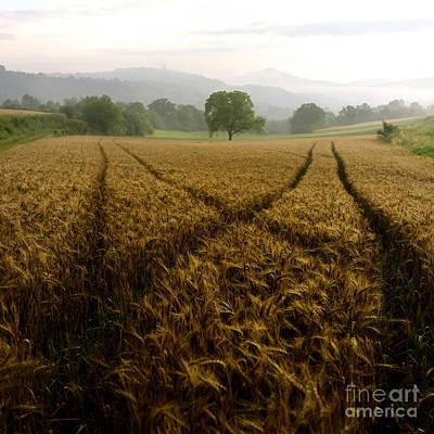 Cornfield Photograph - Barley Field. Auvergne. France. Europe. by Bernard Jaubert