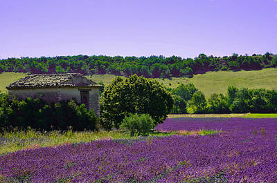 Photograph - Barn Among The Lavender Field by Dany Lison
