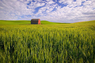 Photograph - Barn And Wheat by Randy Green