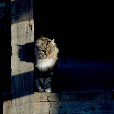 Gray Tabby Photograph - Barn Cat by Art Block Collections