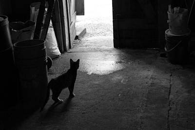 Photograph - Barn Cat by Lorna R Mills DBA  Lorna Rogers Photography