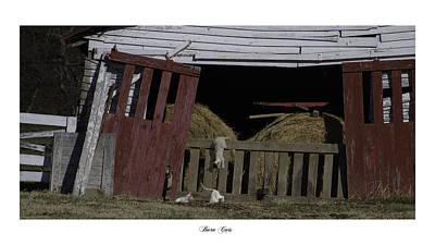 Brentwood Barn Photograph - Barn Cats by Gina Munger