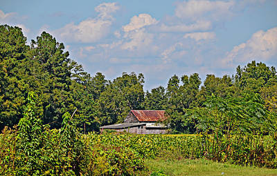 Photograph - Barn In A Bean Field by Linda Brown
