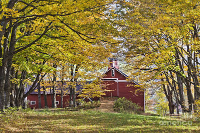 Photograph - Barn In Autumn Woods by Alan L Graham