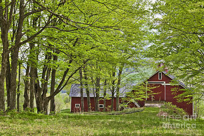Photograph - Barn In Spring Woods by Alan L Graham