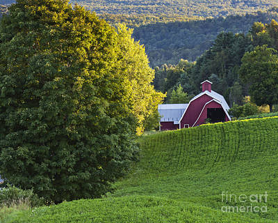 Photograph - Barn In Summer Landscape by Alan L Graham