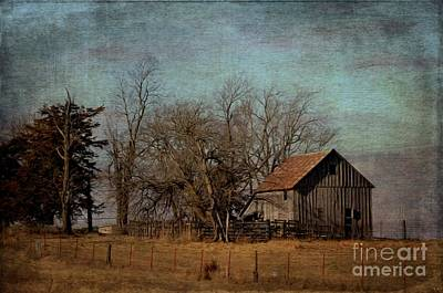 Photograph - Barn - Life Amongst The Trees by Liane Wright